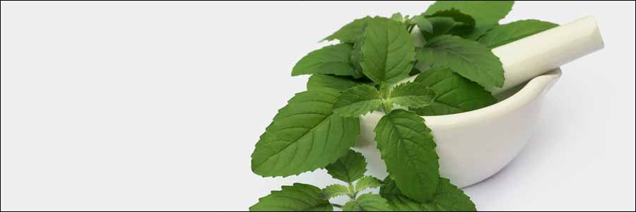 Tulsi-for-Health